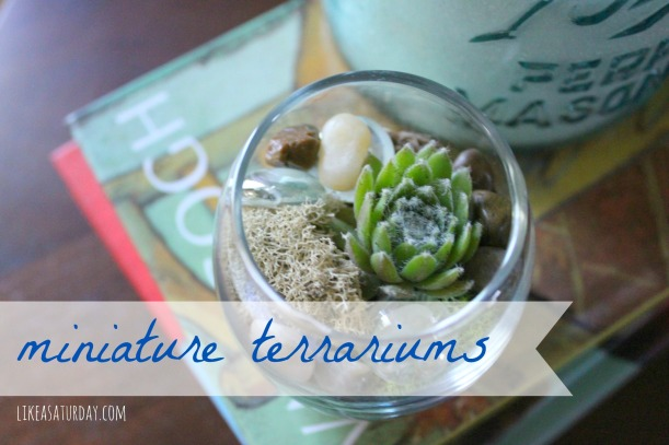 miniature terrariums : like a saturday
