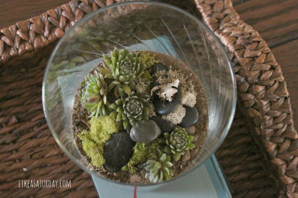 10 Awesome DIY Mother's Day Gifts : Terrarium